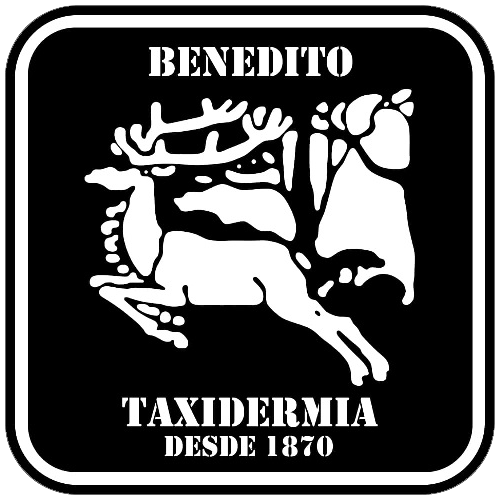Taxidermia Benedito